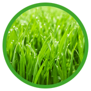 Everlush Lawn Care - Based in Beckenham, Kent